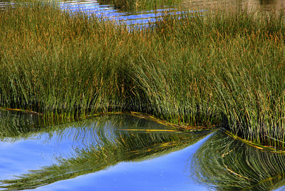 Our boat carefully made its way between the reeds in the shallow waters in this part of Lake Titicaca.