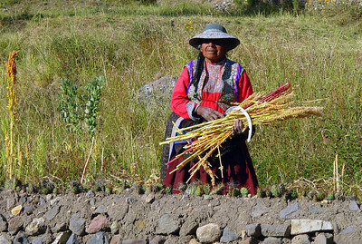 """""""Oh look, a woman working in the field. I think I'll take a picture."""" Don't make that mistake. That weapon in her hand wasn't for hacking down grains. It was for extracting soles (so-lays, the Peruano currency) from tourists who took her picture. Run!!!"""