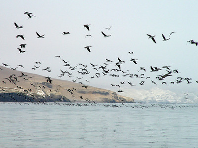 Thousands of birds flew overhead. Look out below!