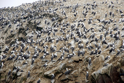 The islands were full of bird life. Billions of boobies roosted on the rocky shores. Boobies, by the way, are about the dumbest birds we have ever encountered. They attack fishing lures trolled by sailboats and get caught in the lines frequently. Idiots!