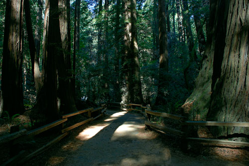 Muir Woods in the Bay Area. We took a hike through Muir Woods and stood in awe of the massive redwoods.