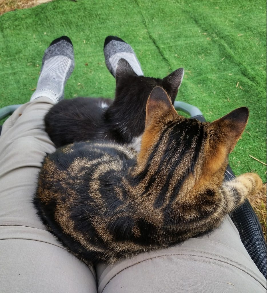 Kittens on the lap