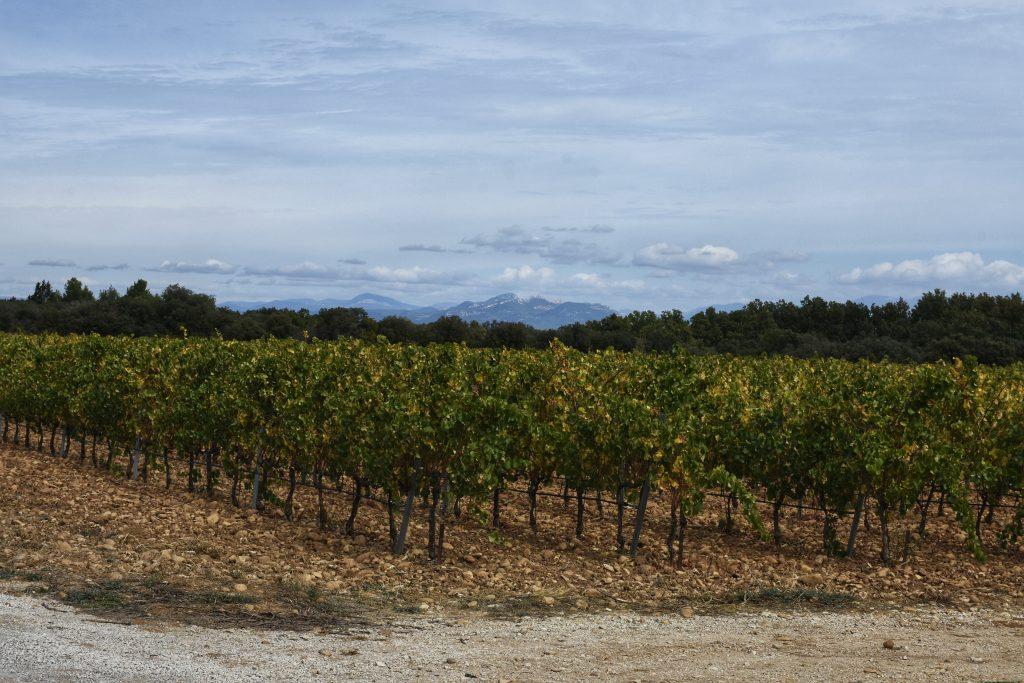 Côtes du Rhône vineyards as far as the eye can see